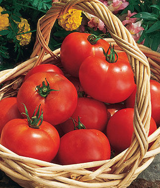 Tomato, Early Girl Hybrid - Burpee Seeds and Plants