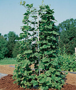 Pole Bean And Pea Tower, , large