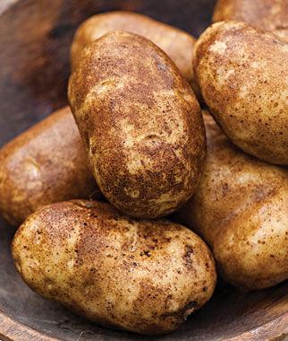 Russet Norkotah Potato Seeds And Plants Vegetable