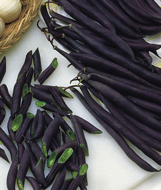 Purple Queen Bean Seeds And Plants Vegetable Gardening At