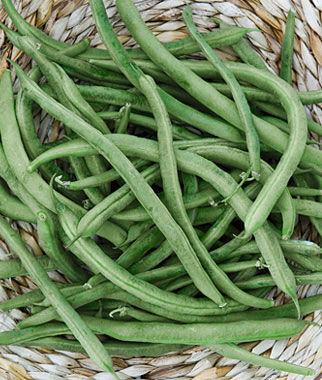 how to grow bush green beans indoors