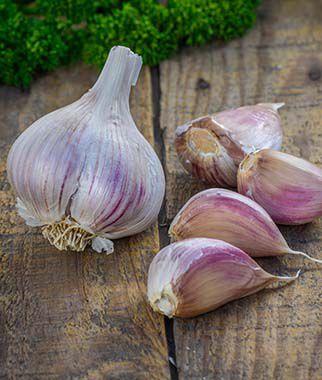 Garlic Georgia Crystal Burpee