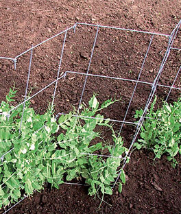 Pea And Cucumber Fence 2/Pack, , large