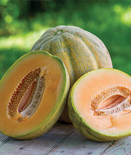 how to grow muskmelon from seed