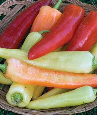 Sweet Banana Pepper Seeds and Plants, Vegetable Gardening ...