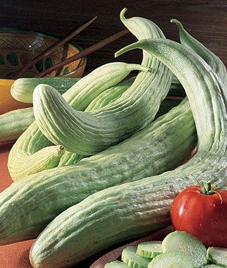 Full Shade Garden Vegetables